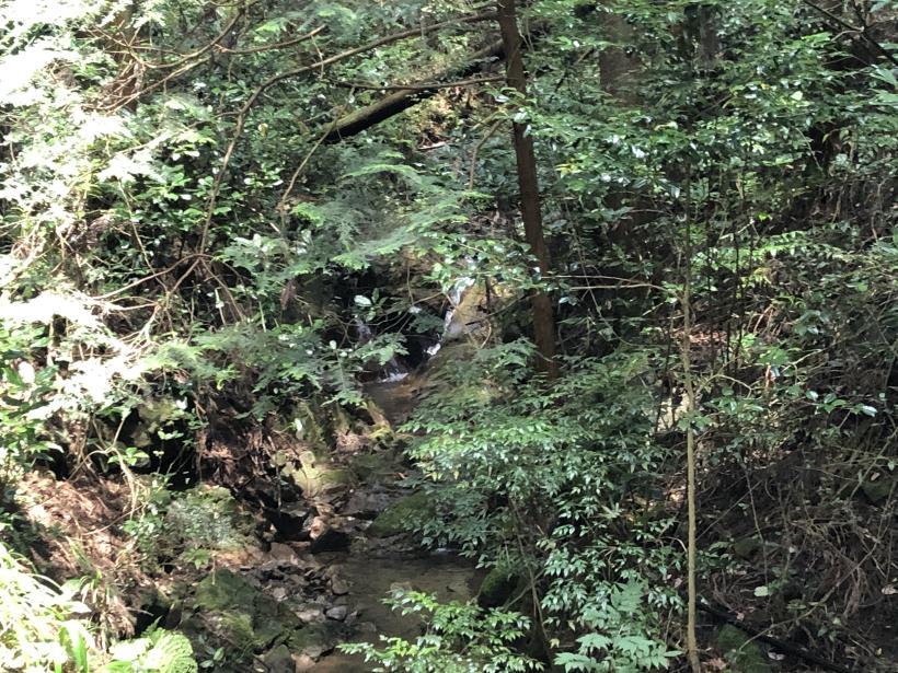 樽沢林道と金比羅山09