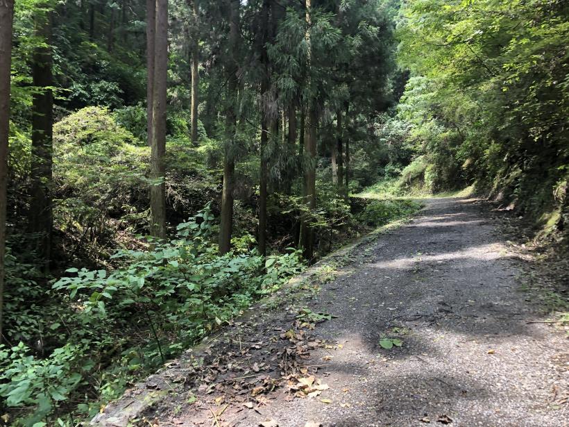 樽沢林道と金比羅山18