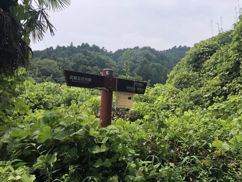 樽沢林道と金比羅山27