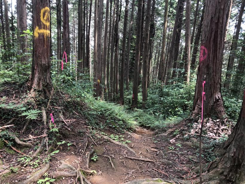 樽沢林道と金比羅山30
