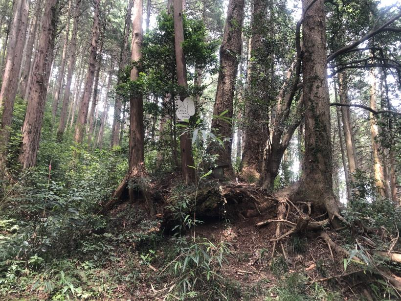 樽沢林道と金比羅山32