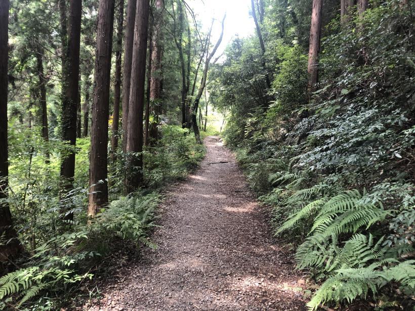 樽沢林道と金比羅山34