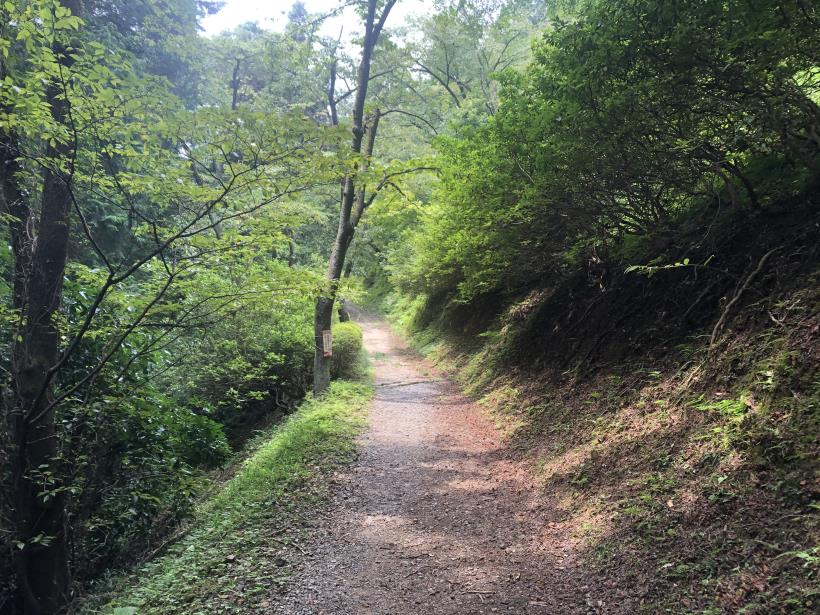 樽沢林道と金比羅山35