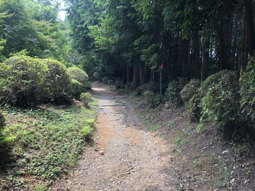樽沢林道と金比羅山39