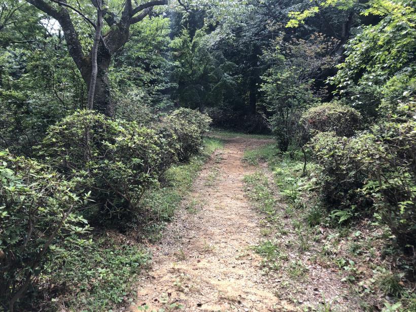 樽沢林道と金比羅山48