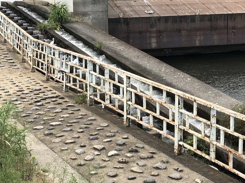 多摩川河口53