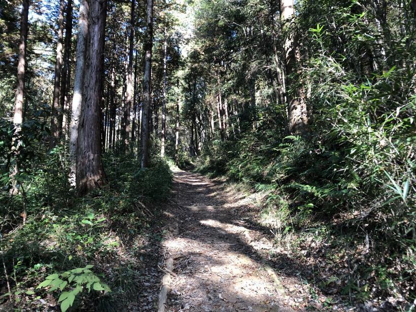 日の出野鳥の森09