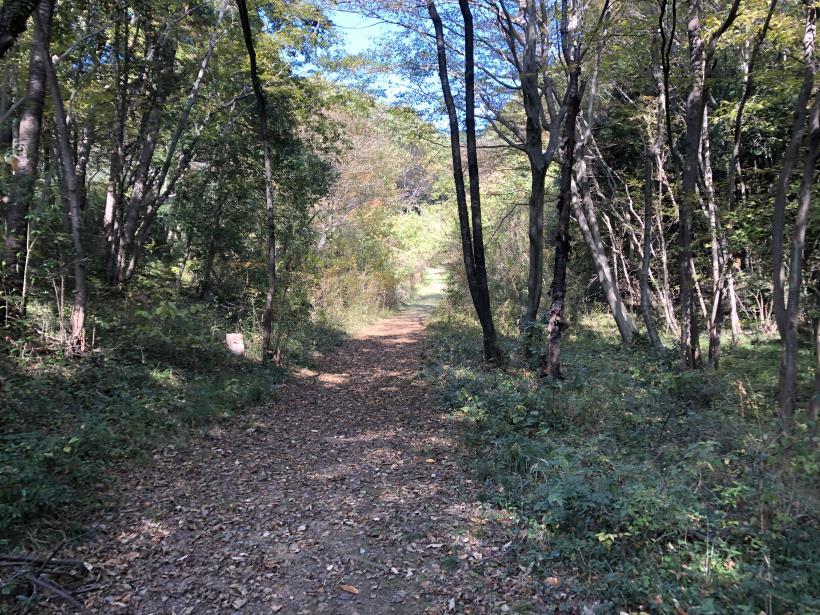日の出野鳥の森11