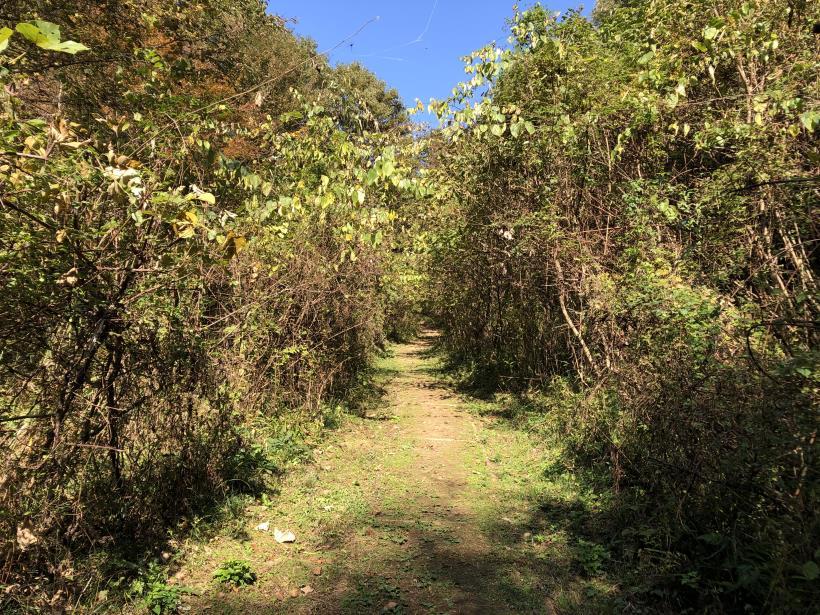 日の出野鳥の森12