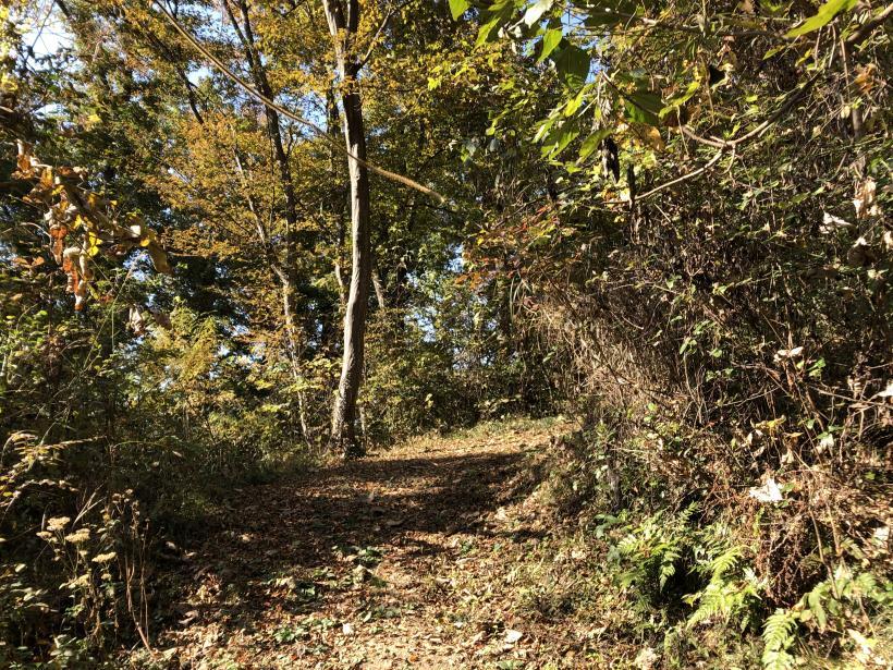 日の出野鳥の森13