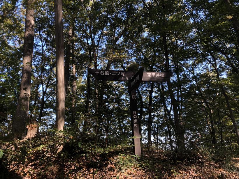 日の出野鳥の森17