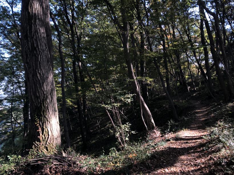 日の出野鳥の森18