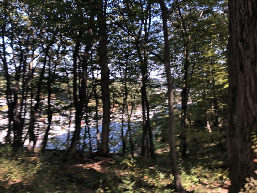 日の出野鳥の森19