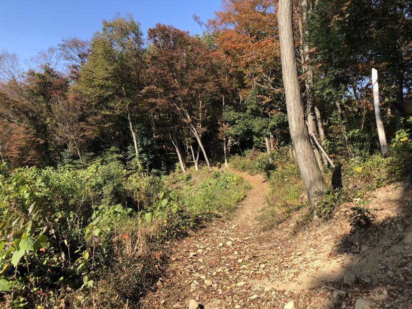 日の出野鳥の森20