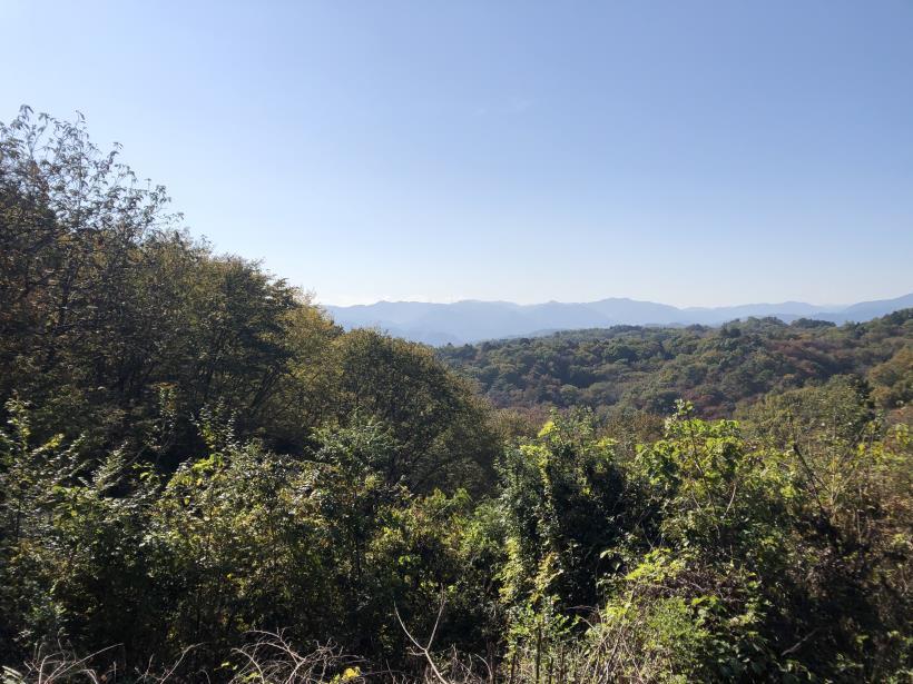 日の出野鳥の森22