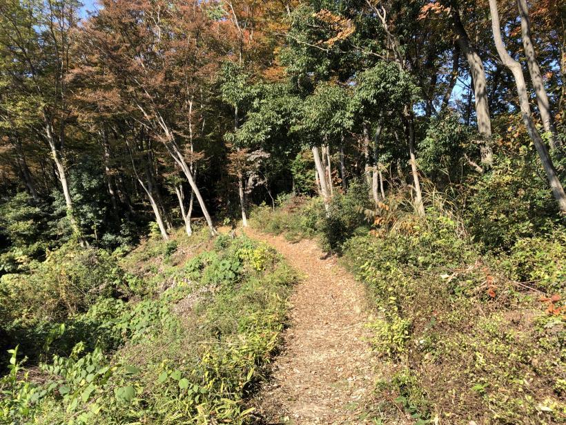 日の出野鳥の森24