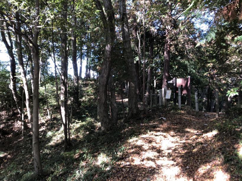 日の出野鳥の森25