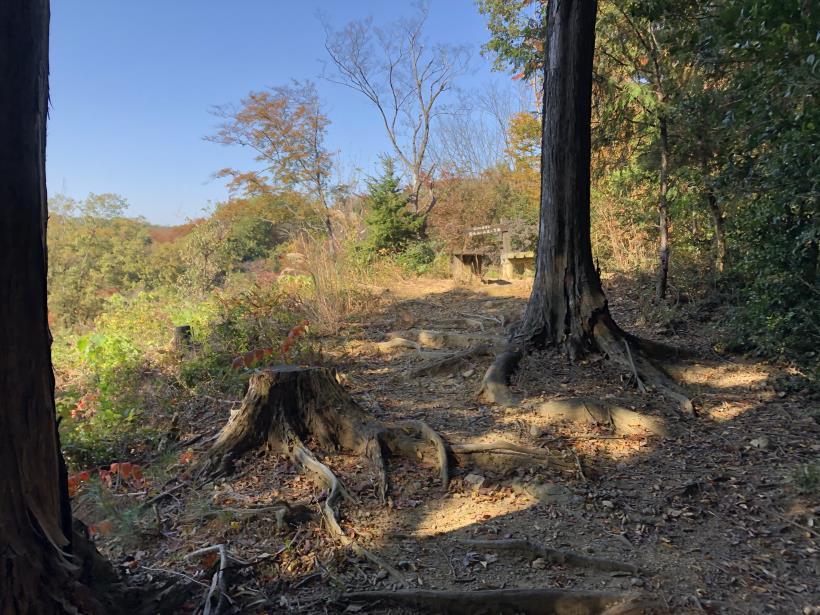 日の出野鳥の森26