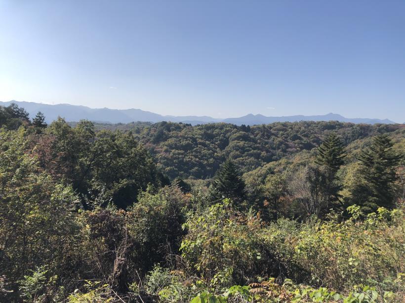 日の出野鳥の森27