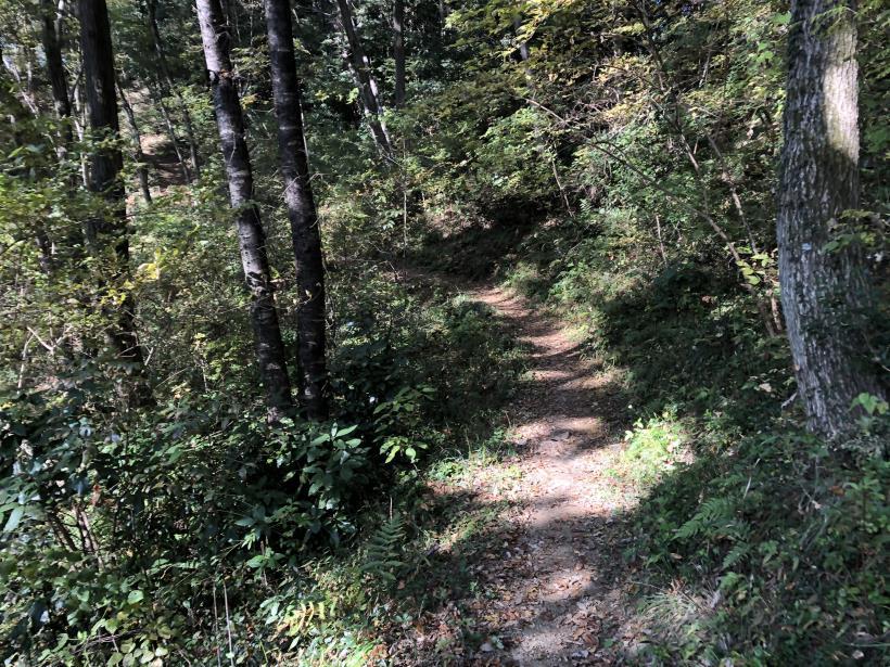 日の出野鳥の森29
