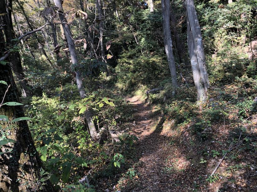 日の出野鳥の森30
