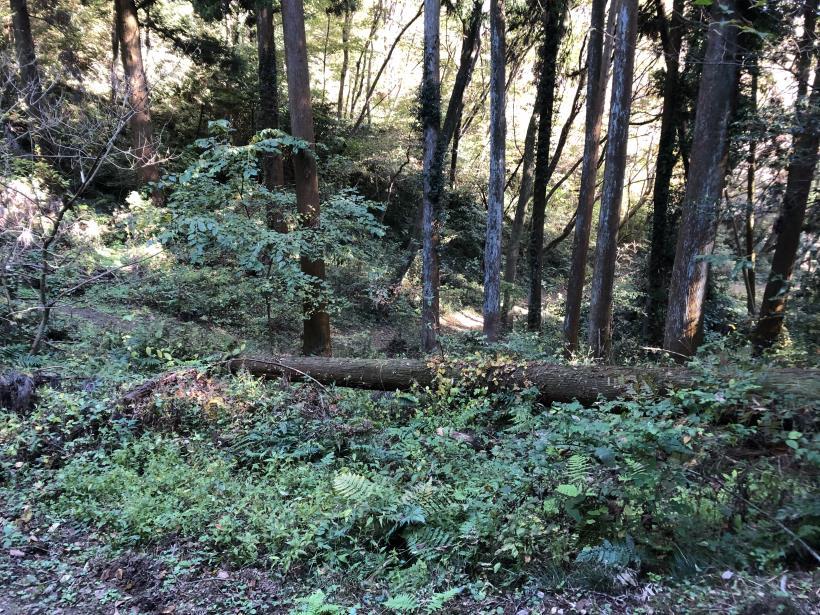 日の出野鳥の森37