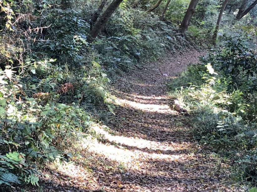 日の出野鳥の森38