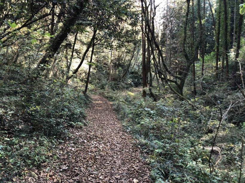 日の出野鳥の森39