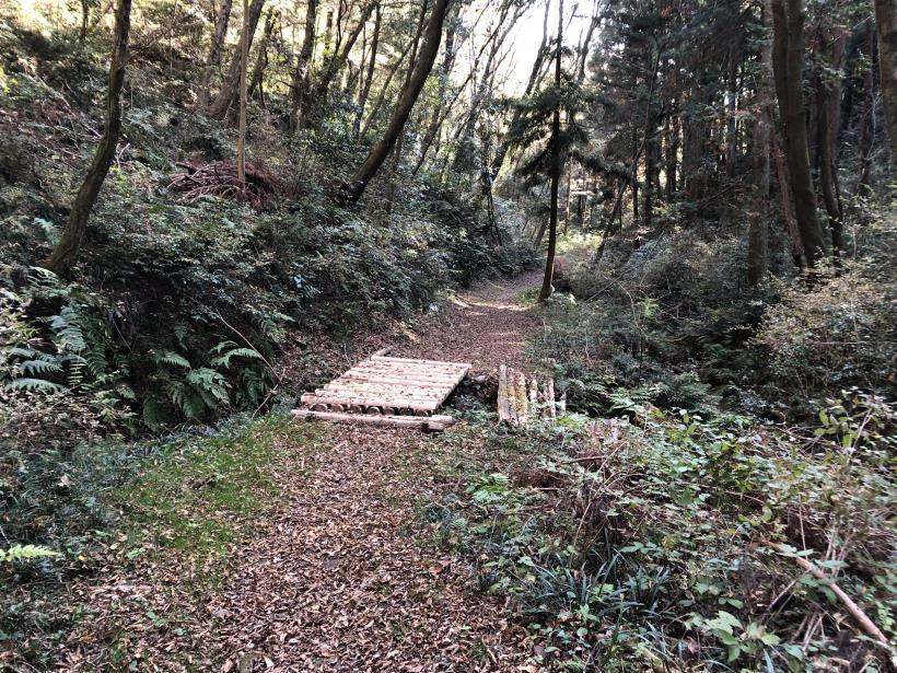 日の出野鳥の森40