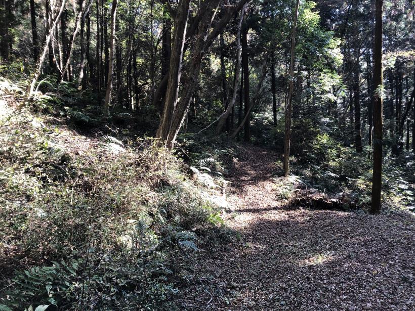 日の出野鳥の森42