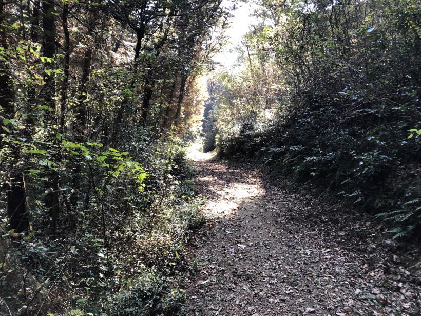 日の出野鳥の森44