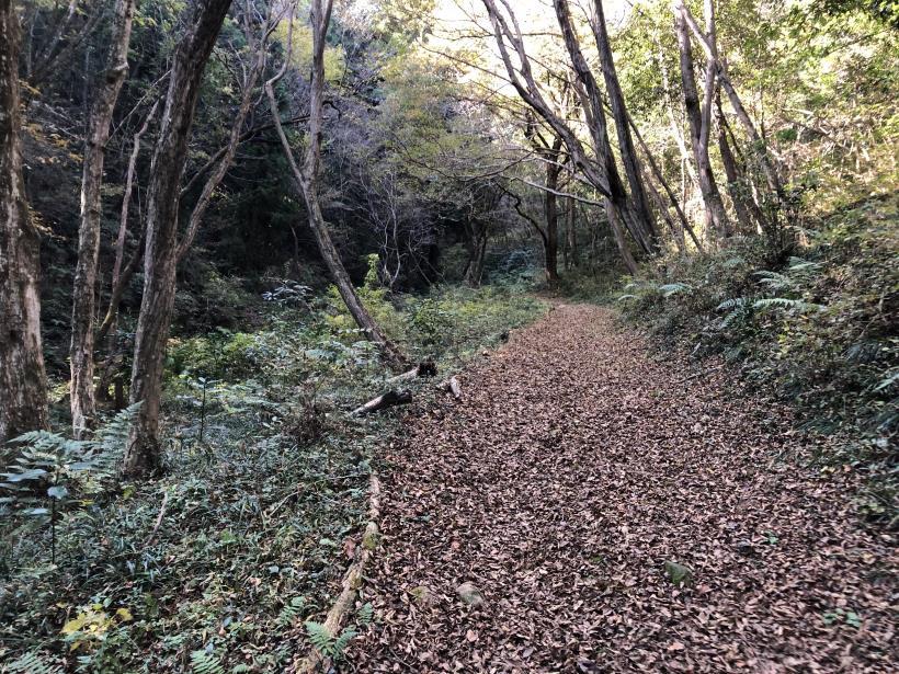 日の出野鳥の森46