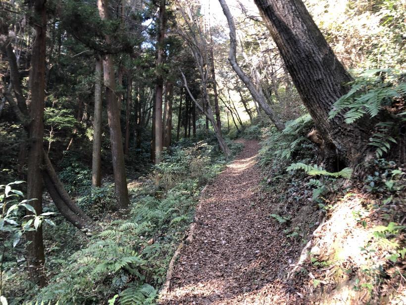 日の出野鳥の森48