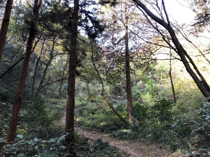 日の出野鳥の森49