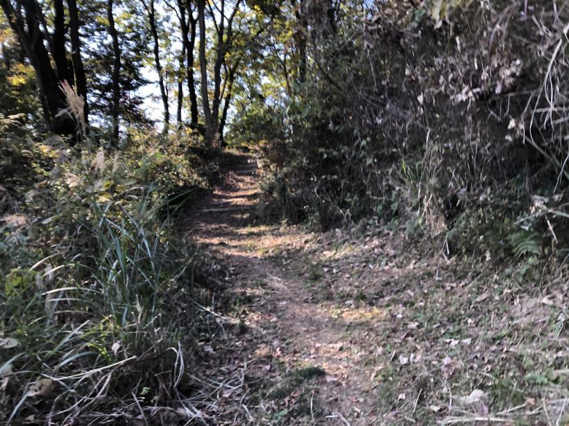 日の出野鳥の森51