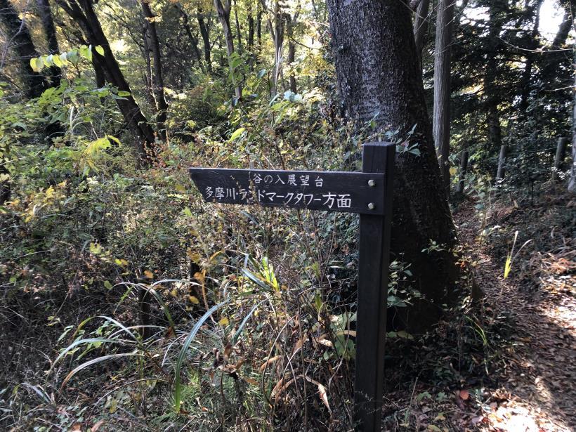 日の出野鳥の森54
