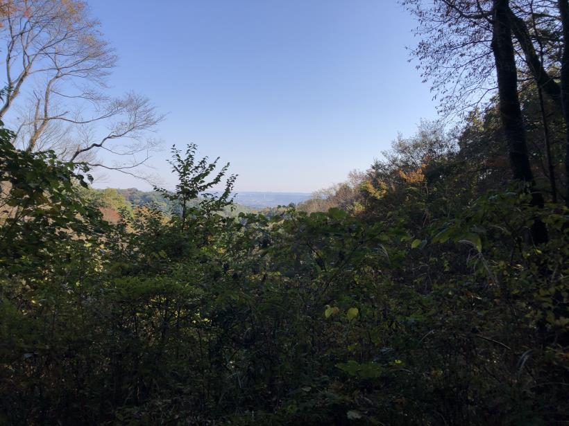 日の出野鳥の森55