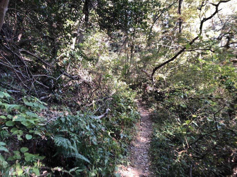日の出野鳥の森57