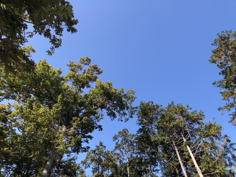 日の出野鳥の森60