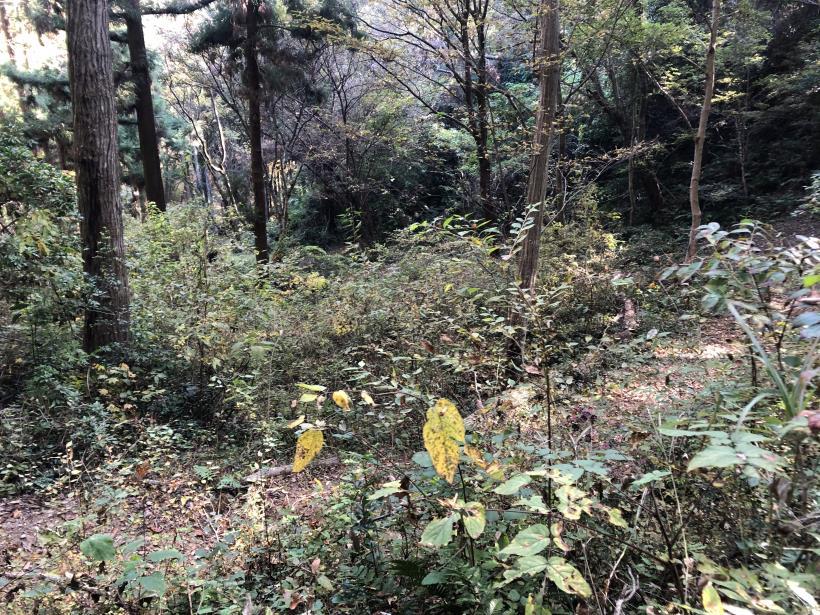 日の出野鳥の森63