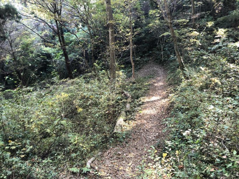 日の出野鳥の森64