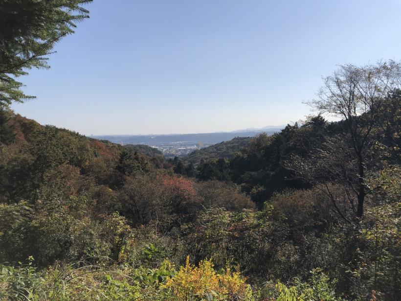 日の出野鳥の森67