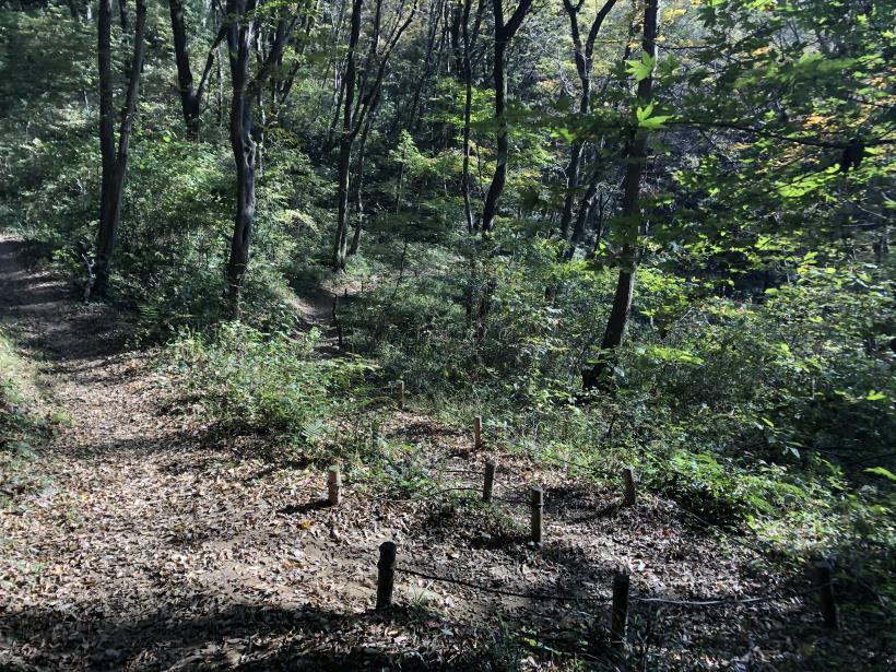 日の出野鳥の森71