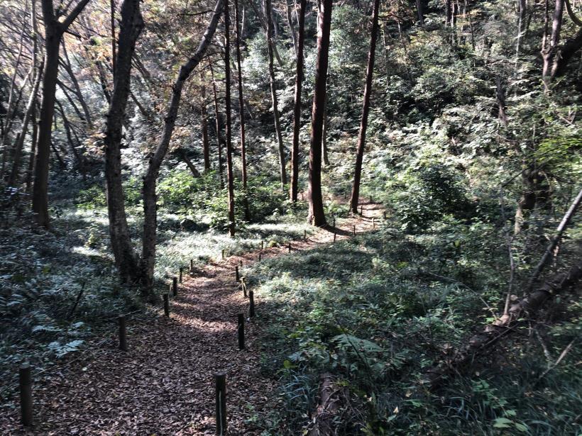 日の出野鳥の森72
