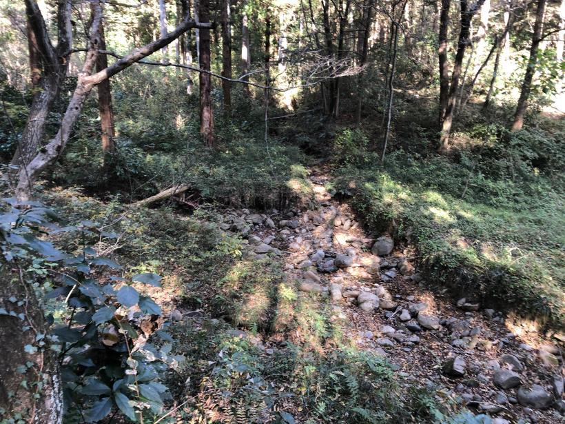 日の出野鳥の森77