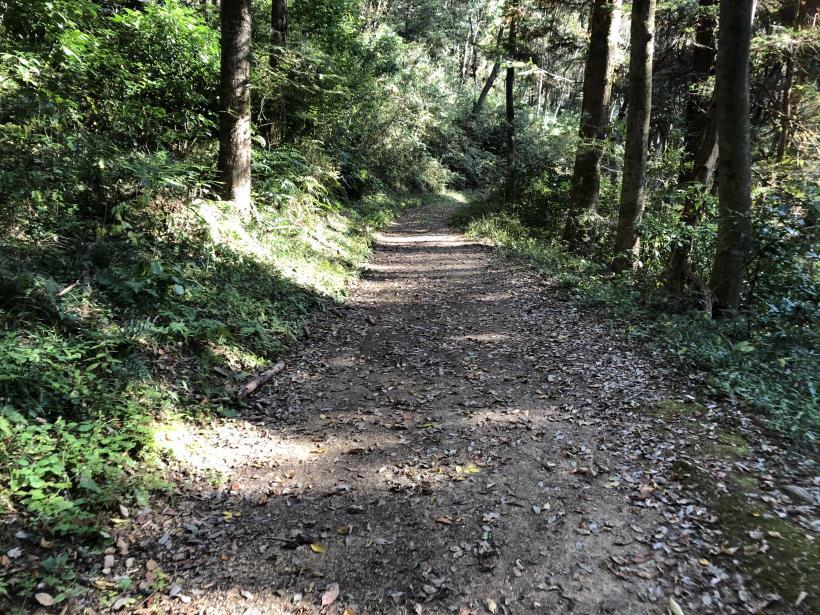 日の出野鳥の森78
