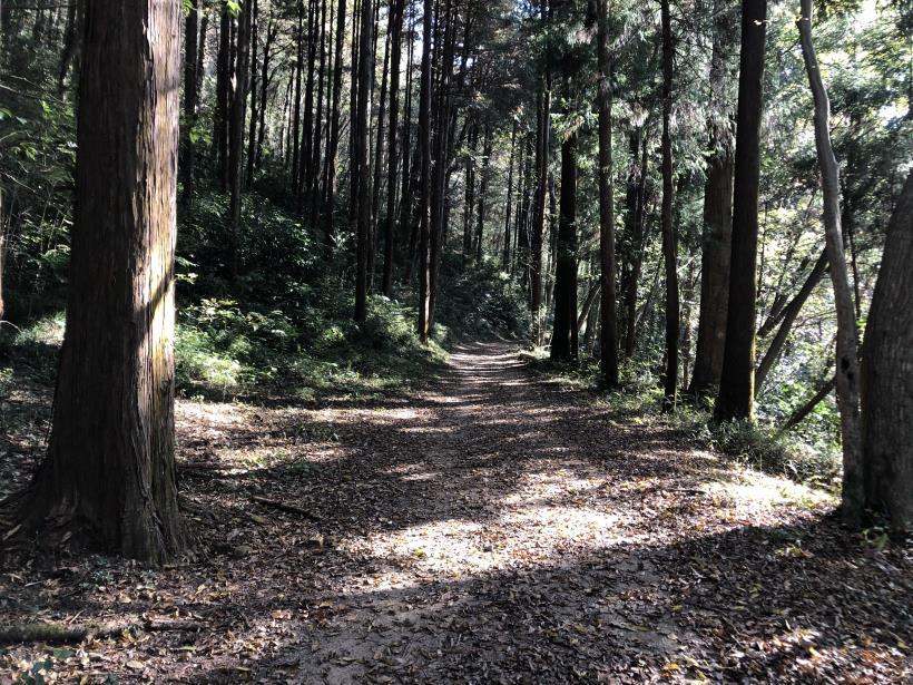 日の出野鳥の森79