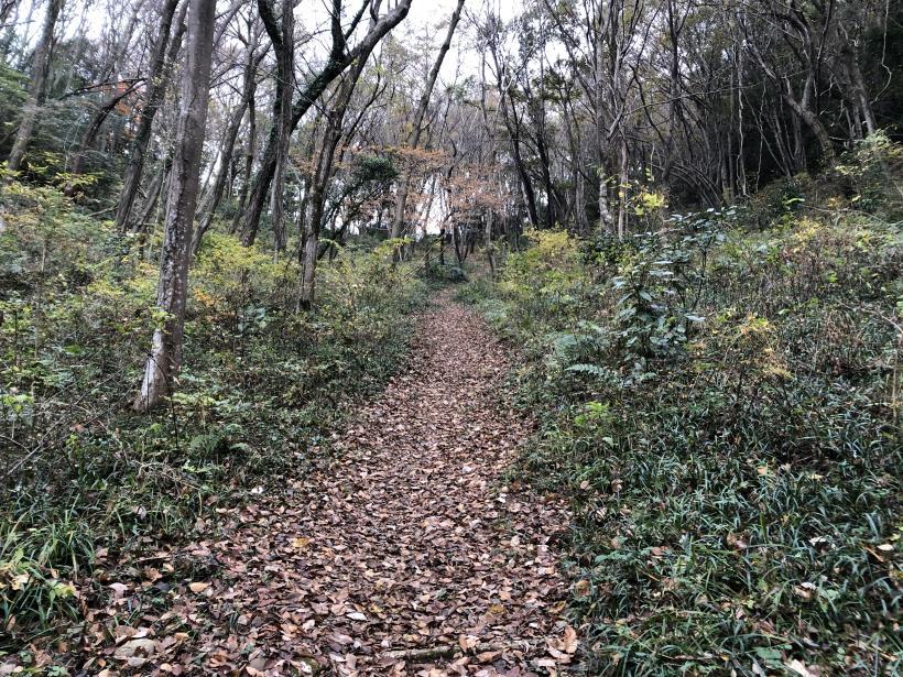 日の出野鳥の森続12