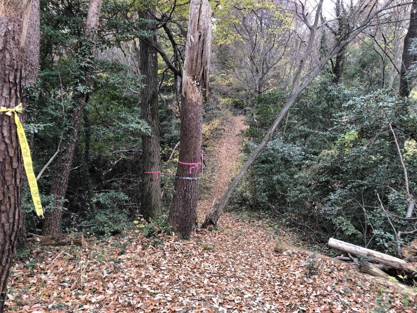 日の出野鳥の森続21
