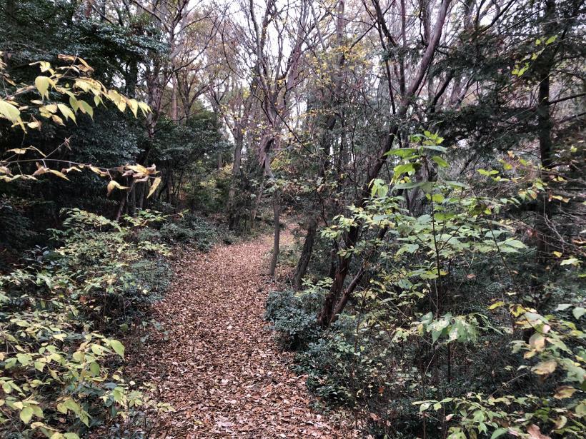 日の出野鳥の森続22